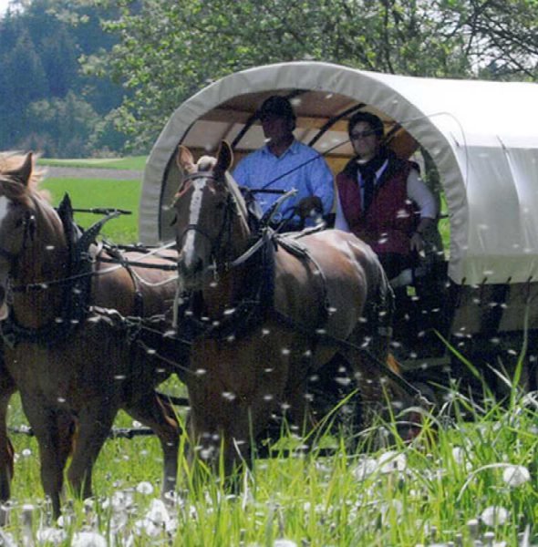 Horse drawn carriage drive through the Cheyres Nature Reserve (Fribourg)